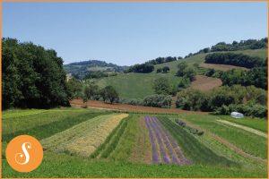 ©Herbio-coltivatori di benessere